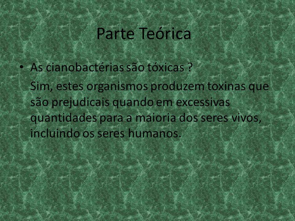 Parte Teórica As cianobactérias são tóxicas