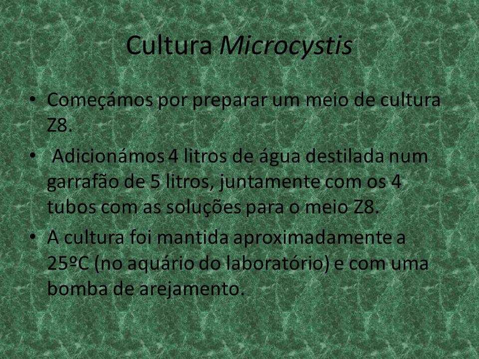 Cultura Microcystis Começámos por preparar um meio de cultura Z8.