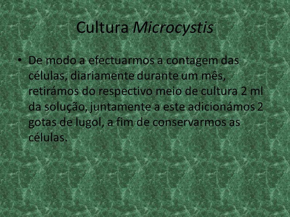 Cultura Microcystis