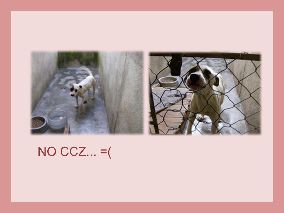 NO CCZ... =(