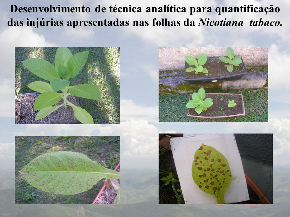 Desenvolvimento de técnica analítica para quantificação das injúrias apresentadas nas folhas da Nicotiana tabaco.