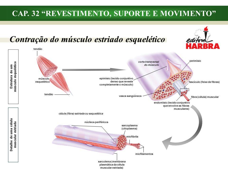 Contração do músculo estriado esquelético