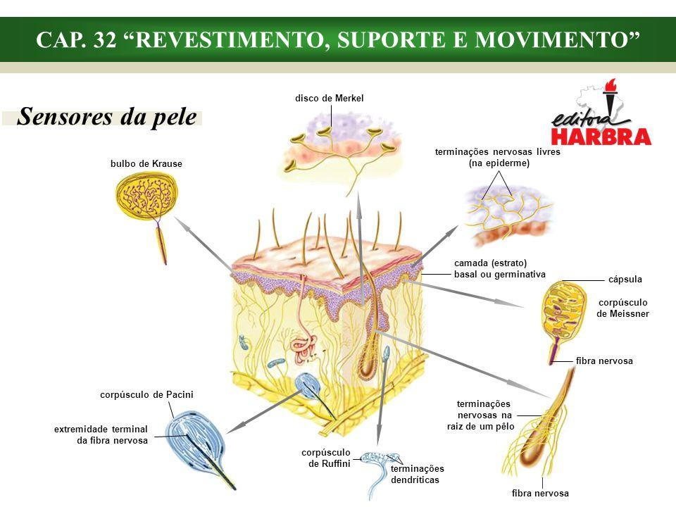 CAP. 32 REVESTIMENTO, SUPORTE E MOVIMENTO