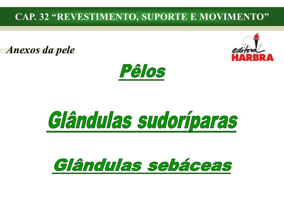 CAP. 32 REVESTIMENTO, SUPORTE E MOVIMENTO Glândulas sudoríparas