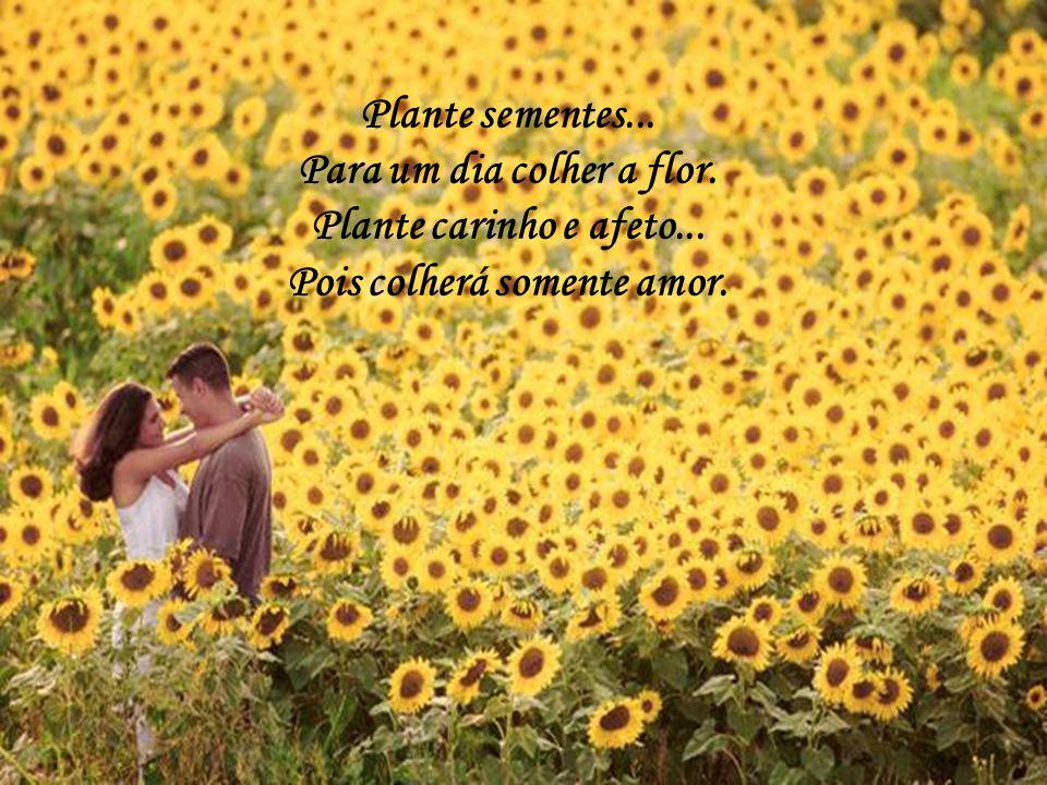 Para um dia colher a flor. Pois colherá somente amor.