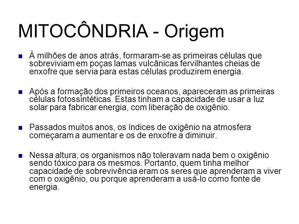 MITOCÔNDRIA - Origem