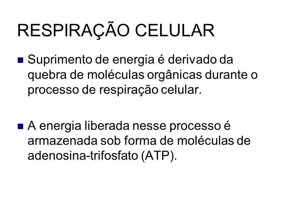 RESPIRAÇÃO CELULAR Suprimento de energia é derivado da quebra de moléculas orgânicas durante o processo de respiração celular.
