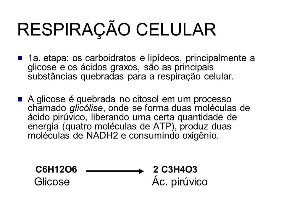 RESPIRAÇÃO CELULAR Glicose Ác. pirúvico