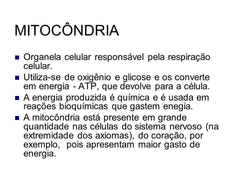 MITOCÔNDRIA Organela celular responsável pela respiração celular.
