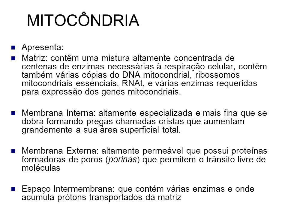 MITOCÔNDRIA Apresenta: