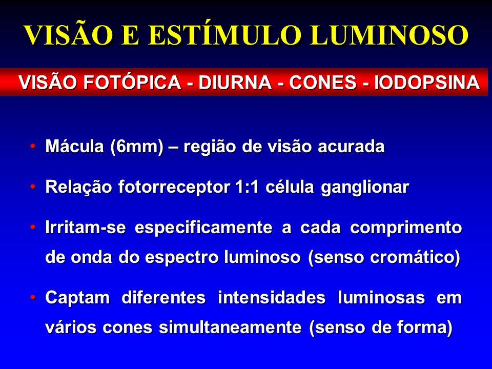 VISÃO E ESTÍMULO LUMINOSO VISÃO FOTÓPICA - DIURNA - CONES - IODOPSINA