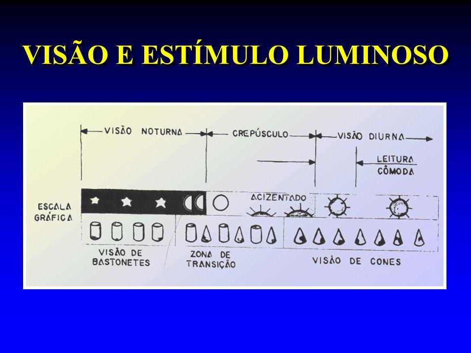 VISÃO E ESTÍMULO LUMINOSO