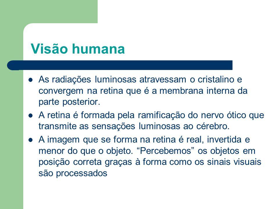 Visão humana As radiações luminosas atravessam o cristalino e convergem na retina que é a membrana interna da parte posterior.