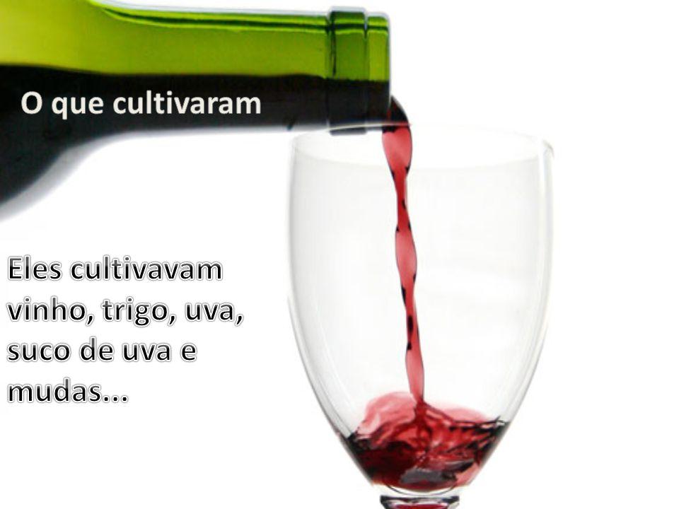 O que cultivaram Eles cultivavam vinho, trigo, uva, suco de uva e mudas...