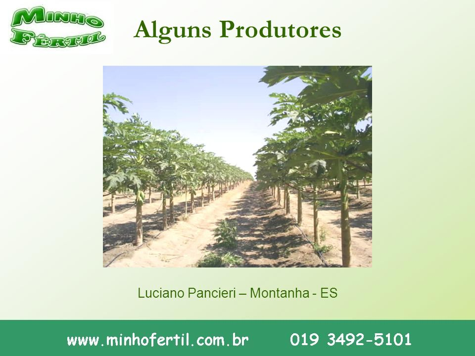 Alguns Produtores Luciano Pancieri – Montanha - ES