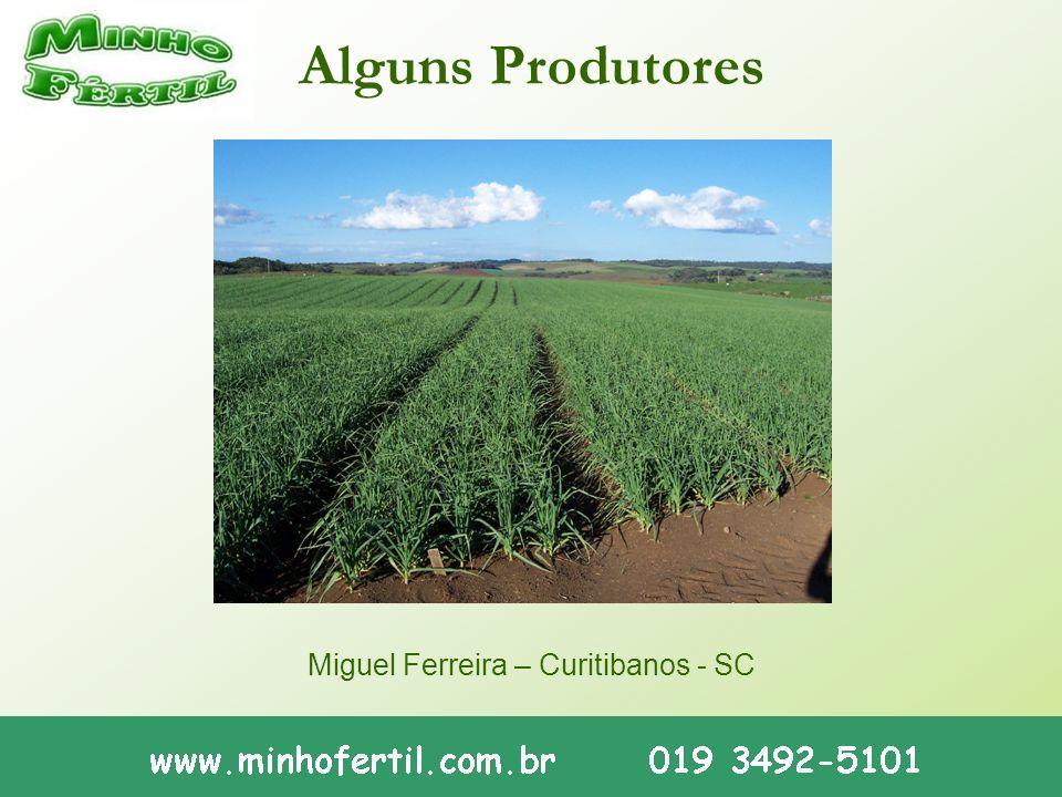 Alguns Produtores Miguel Ferreira – Curitibanos - SC