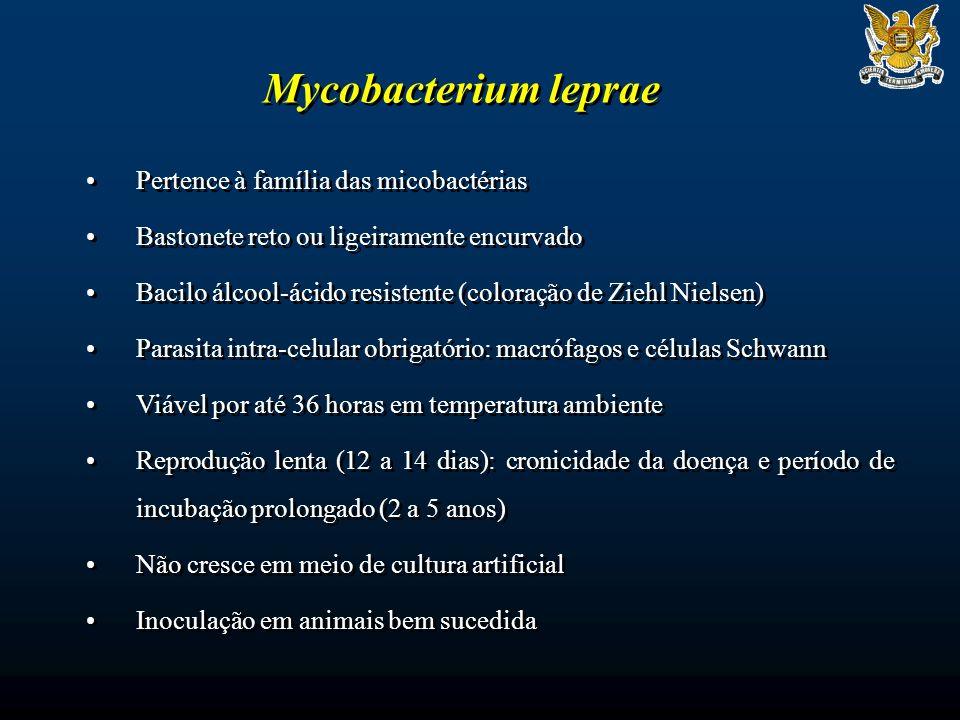 Mycobacterium leprae Pertence à família das micobactérias