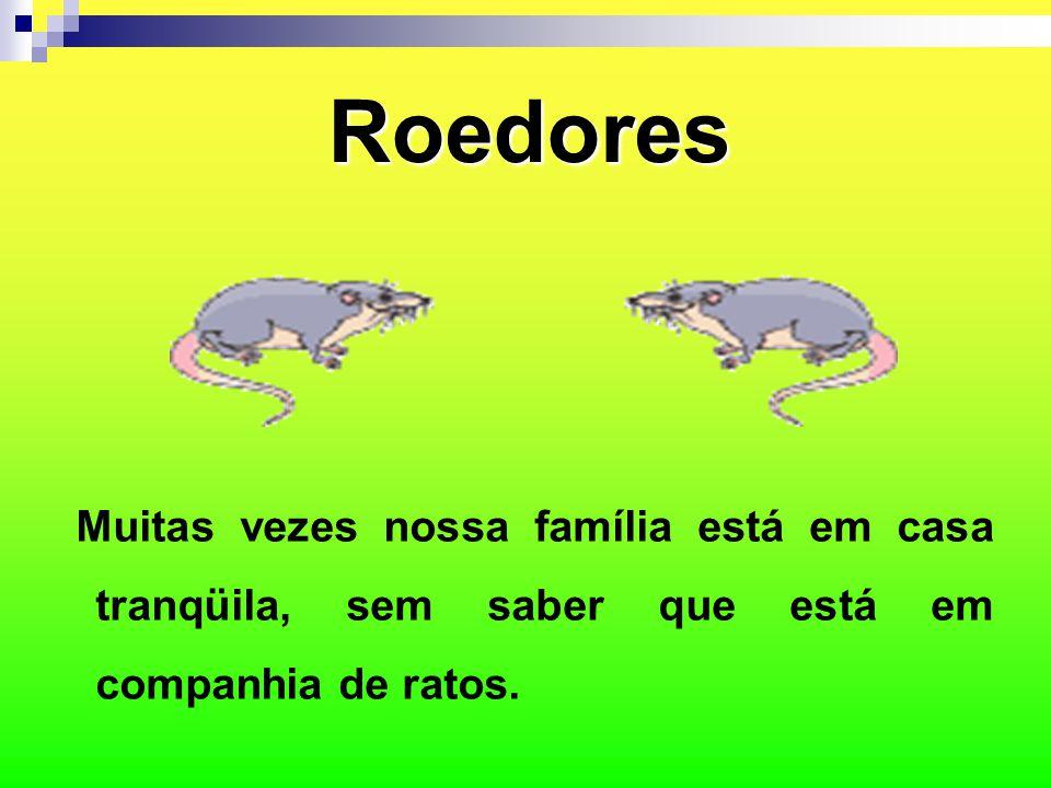 Roedores Muitas vezes nossa família está em casa tranqüila, sem saber que está em companhia de ratos.