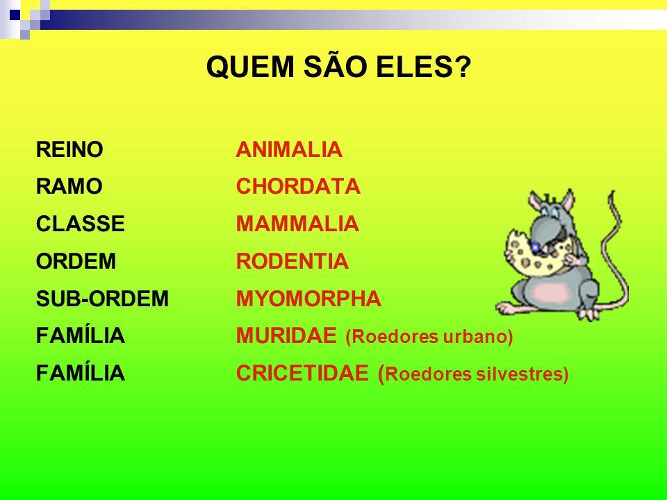 QUEM SÃO ELES REINO ANIMALIA RAMO CHORDATA CLASSE MAMMALIA