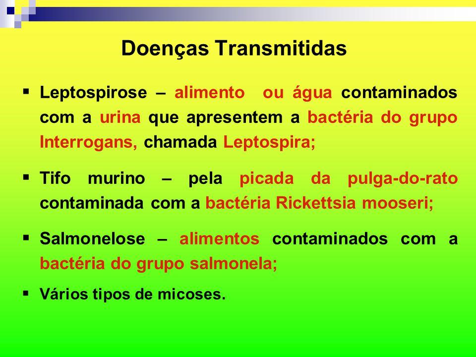 Doenças Transmitidas Leptospirose – alimento ou água contaminados com a urina que apresentem a bactéria do grupo Interrogans, chamada Leptospira;