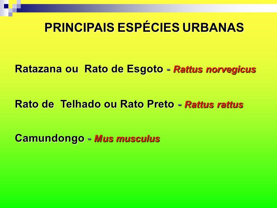 PRINCIPAIS ESPÉCIES URBANAS