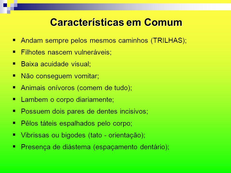 Características em Comum