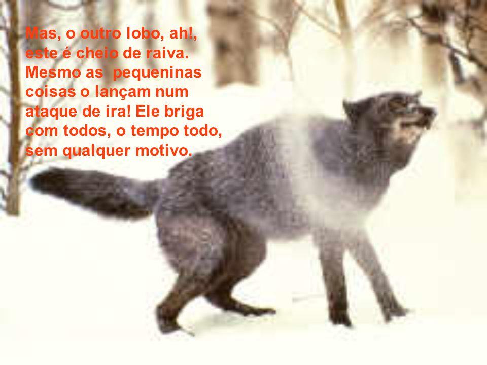 Mas, o outro lobo, ah. , este é cheio de raiva