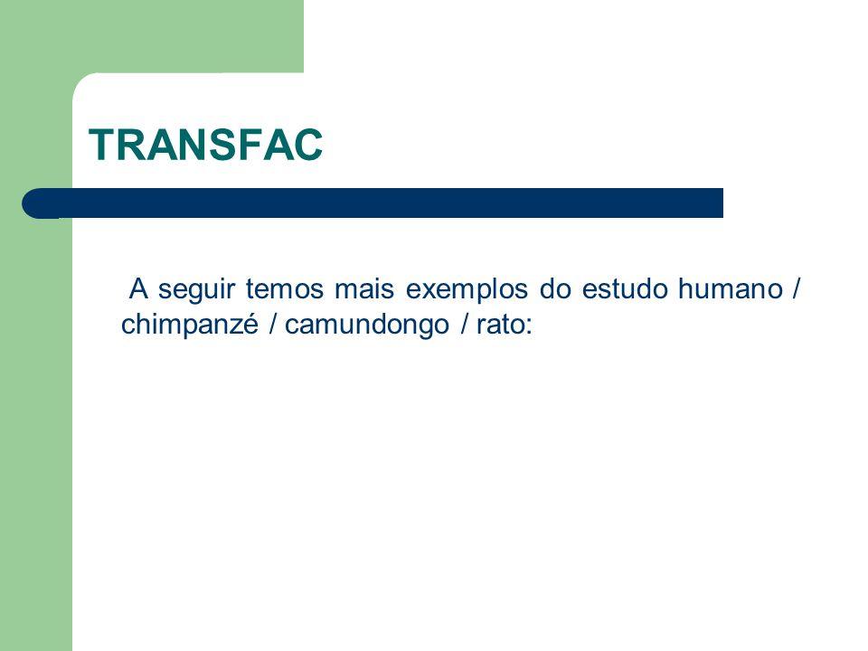 TRANSFAC A seguir temos mais exemplos do estudo humano / chimpanzé / camundongo / rato: