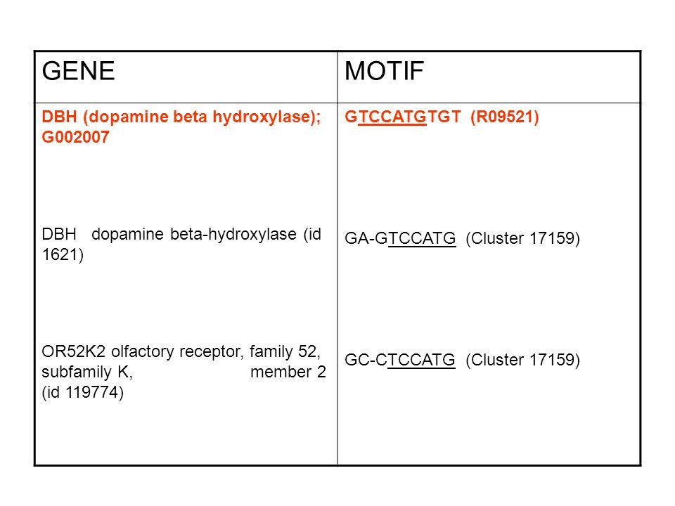 GENE MOTIF DBH (dopamine beta hydroxylase); G002007