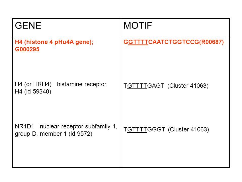 GENE MOTIF H4 (histone 4 pHu4A gene); G000295