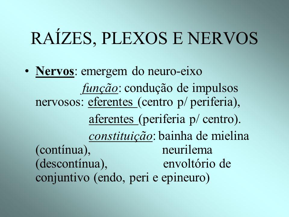 RAÍZES, PLEXOS E NERVOS Nervos: emergem do neuro-eixo