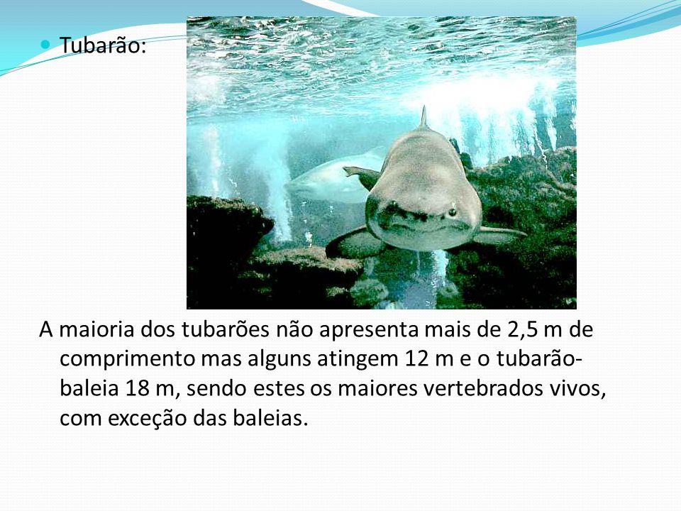 Tubarão: