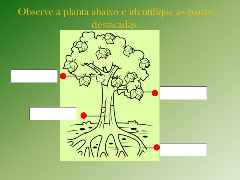 Observe a planta abaixo e identifique as partes destacadas.