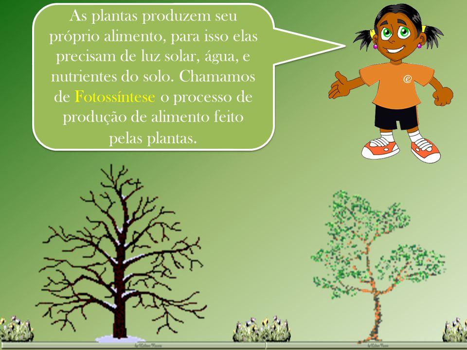 As plantas produzem seu próprio alimento, para isso elas precisam de luz solar, água, e nutrientes do solo.