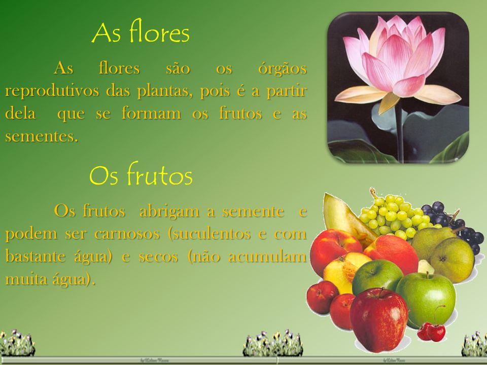 As flores As flores são os órgãos reprodutivos das plantas, pois é a partir dela que se formam os frutos e as sementes.