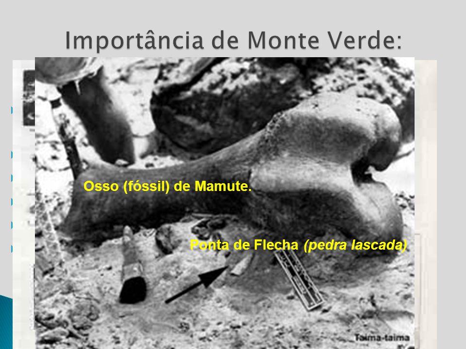 Importância de Monte Verde: