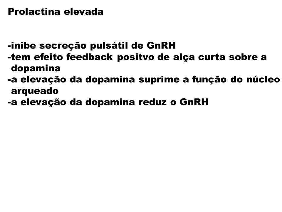 Prolactina elevada -inibe secreção pulsátil de GnRH. -tem efeito feedback positvo de alça curta sobre a.