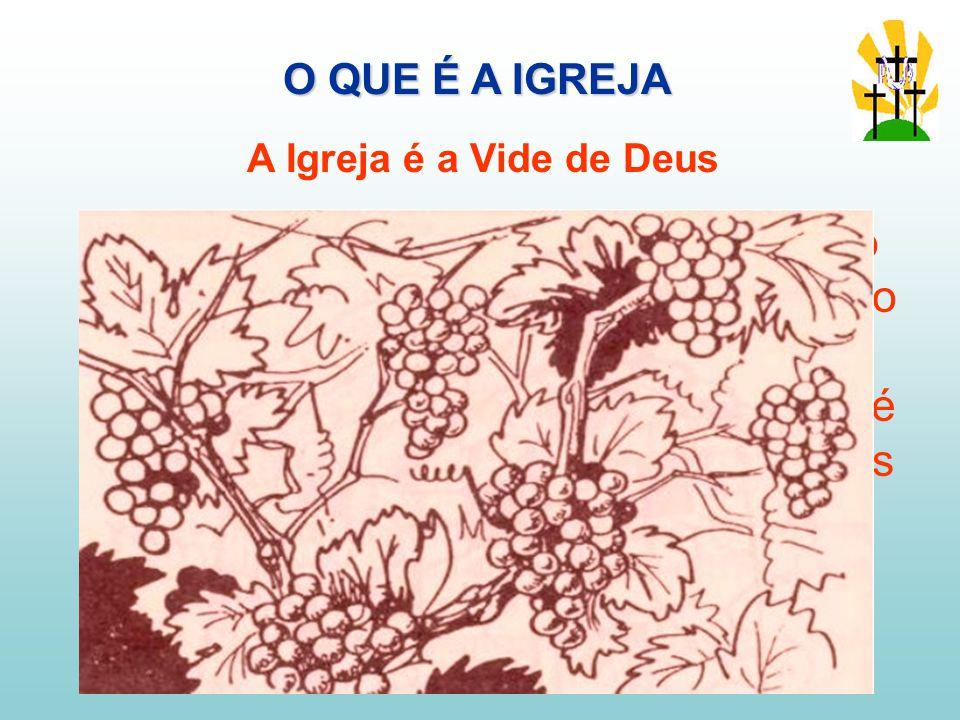 O QUE É A IGREJA A Igreja é a Vide de Deus. No A.T. O povo hebreu era comparado frequentemente a uma vinha, a vinha do Senhor.