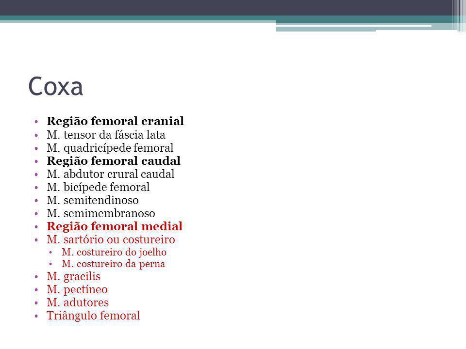 Coxa Região femoral cranial M. tensor da fáscia lata