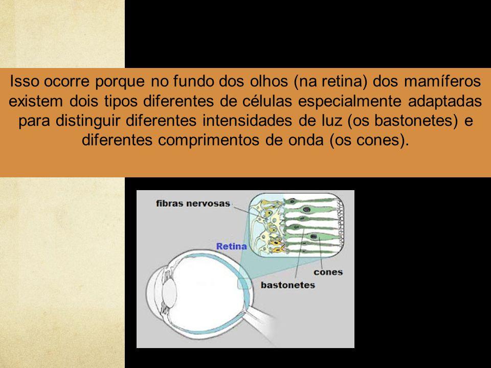 Isso ocorre porque no fundo dos olhos (na retina) dos mamíferos existem dois tipos diferentes de células especialmente adaptadas para distinguir diferentes intensidades de luz (os bastonetes) e diferentes comprimentos de onda (os cones).
