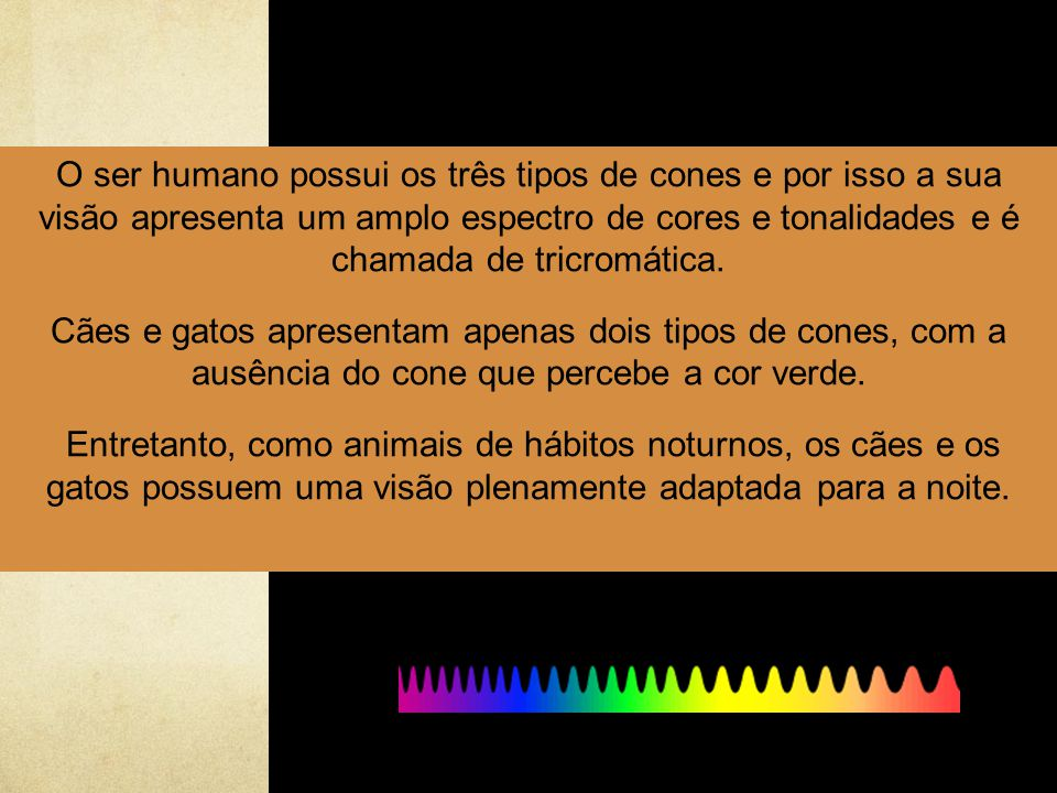 O ser humano possui os três tipos de cones e por isso a sua visão apresenta um amplo espectro de cores e tonalidades e é chamada de tricromática.