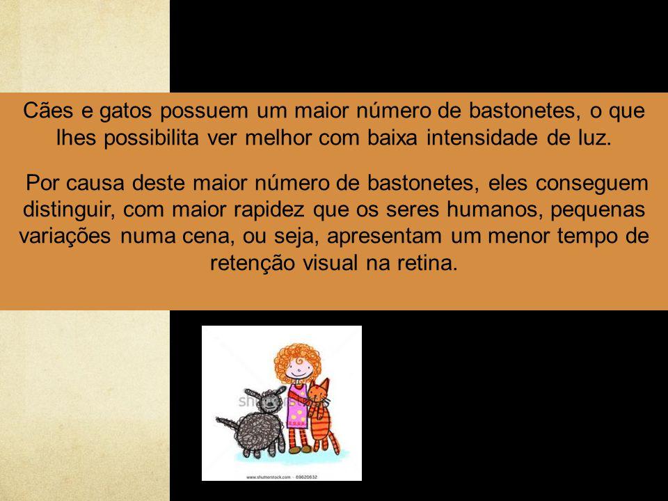 Cães e gatos possuem um maior número de bastonetes, o que lhes possibilita ver melhor com baixa intensidade de luz.