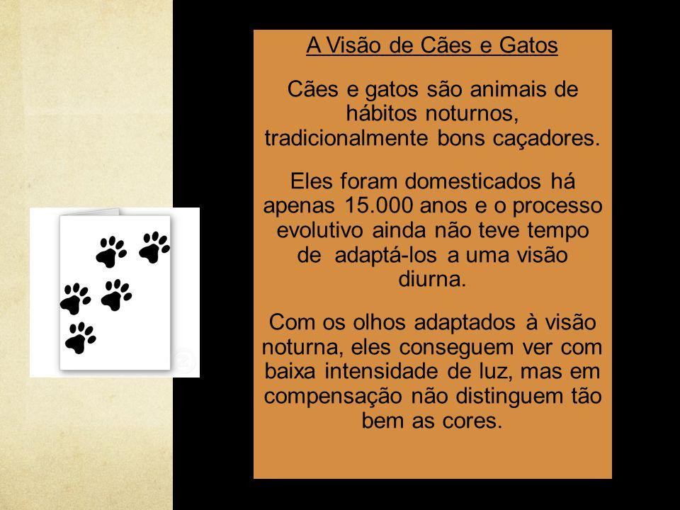 A Visão de Cães e Gatos Cães e gatos são animais de hábitos noturnos, tradicionalmente bons caçadores.