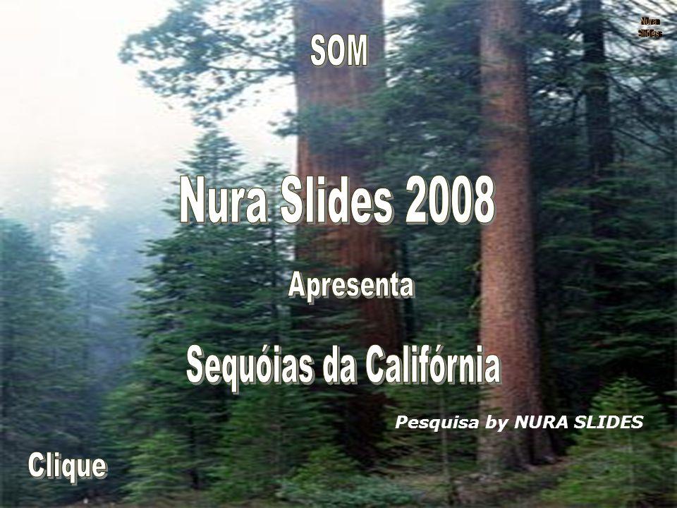 Sequóias da Califórnia