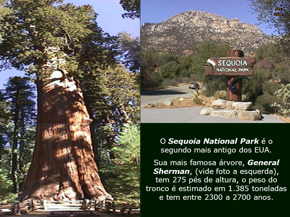 O Sequoia National Park é o segundo mais antigo dos EUA.