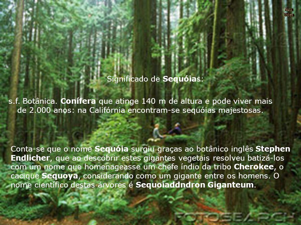 Significado de Sequóias: