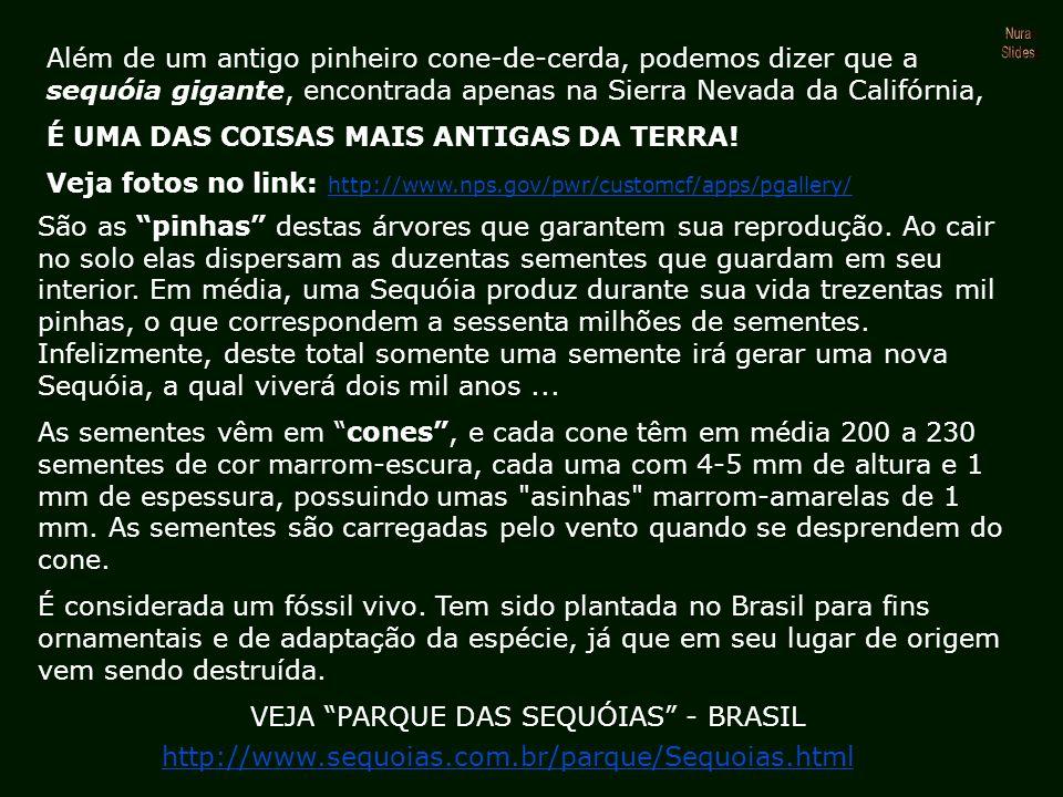 VEJA PARQUE DAS SEQUÓIAS - BRASIL