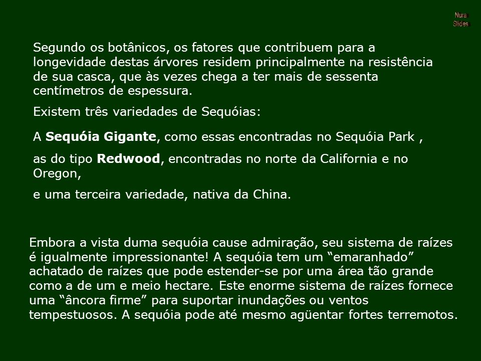 Existem três variedades de Sequóias: