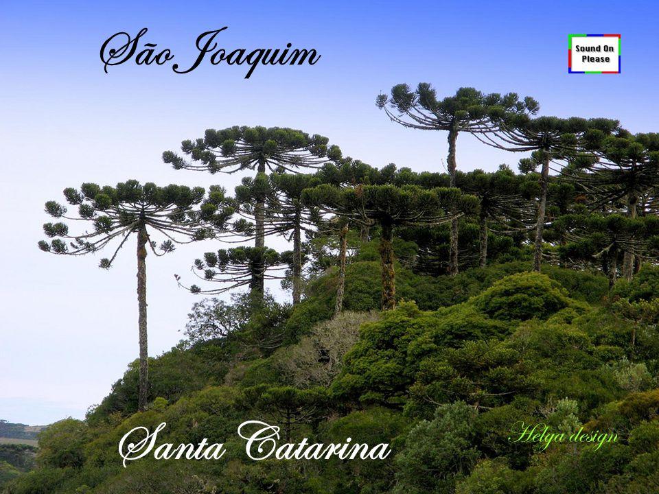 São Joaquim Santa Catarina