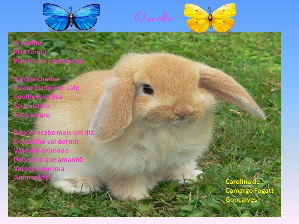 O coelho O coelho Pisa fundo Pisa fundo com seu pé A dona chama